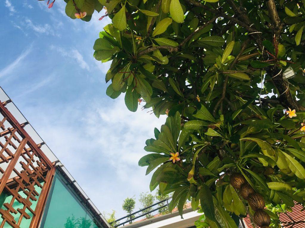 ラ・フローラの青空と木