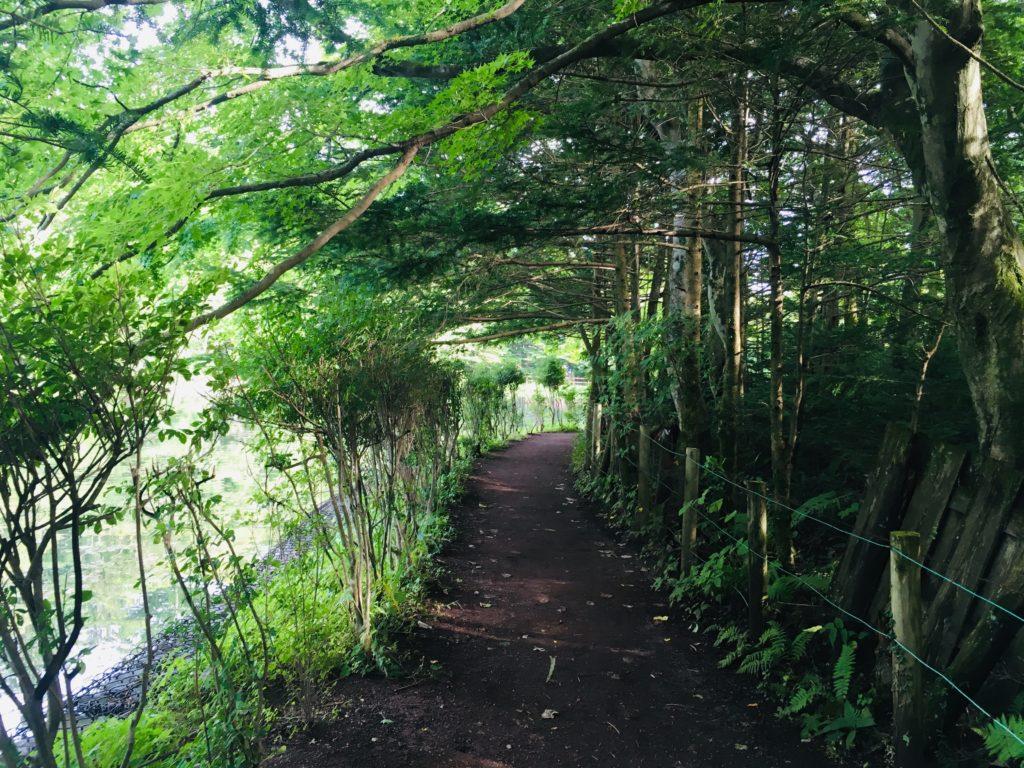 サイクリングで立ち寄った雲場池で軽井沢木漏れ日ウォーク