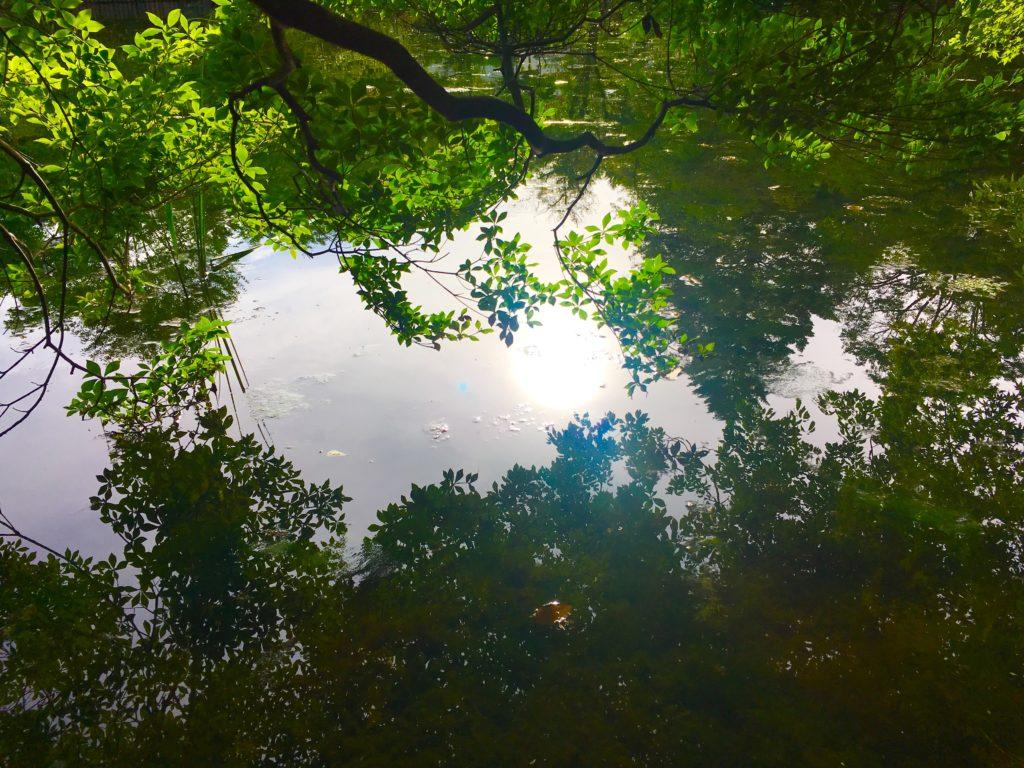 軽井沢の雲場池に映る木々をみにサイクリング