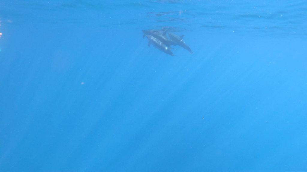 GoProレンタルで撮るイルカ