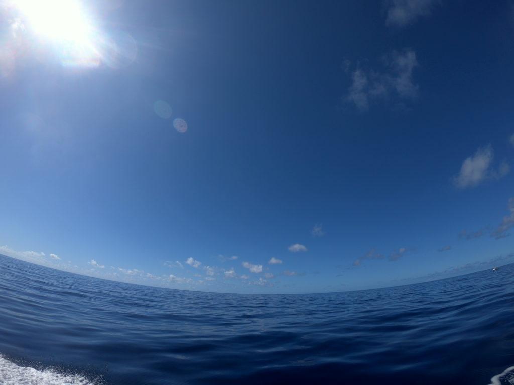 ハワイのイルカと泳ぐツアーへ参加!